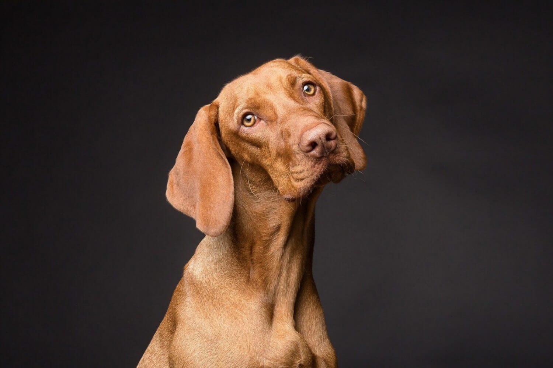 erstaunte hunde lieben eis