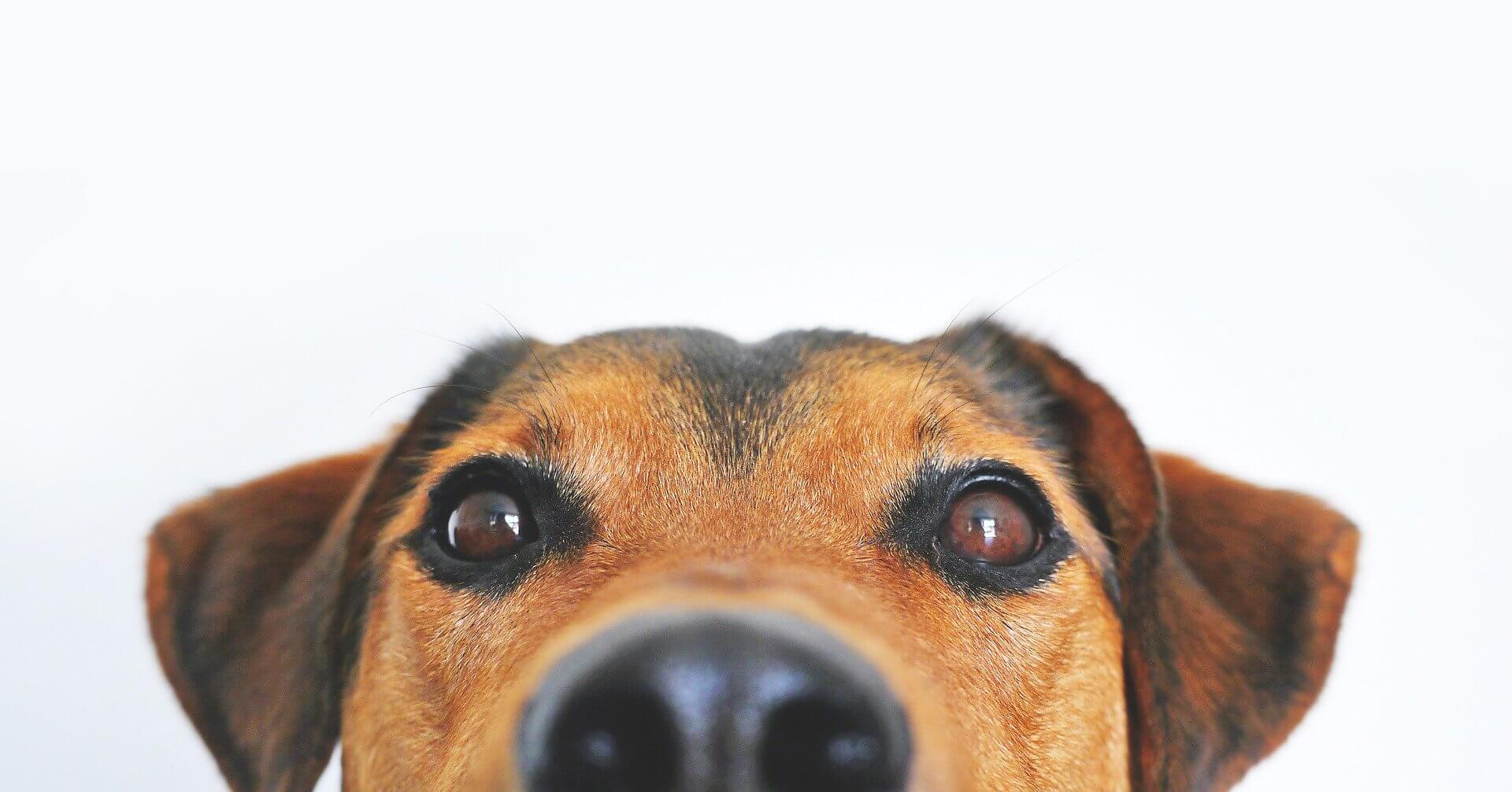 hundeeis-bei-hecheln
